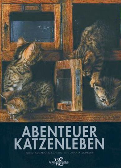 Abenteuer Katzenleben