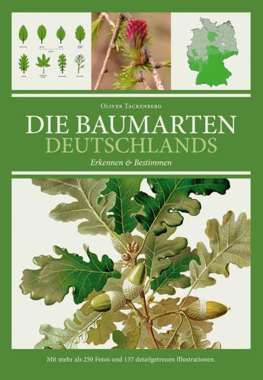 Die Baumarten Deutschlands erkennen und bestimmen.