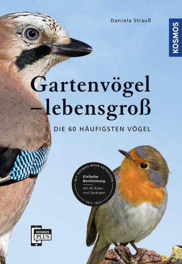 Gartenvögel lebensgroß.