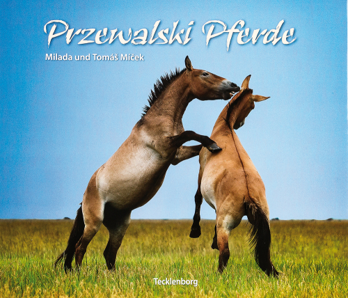 Przewalski Pferde.