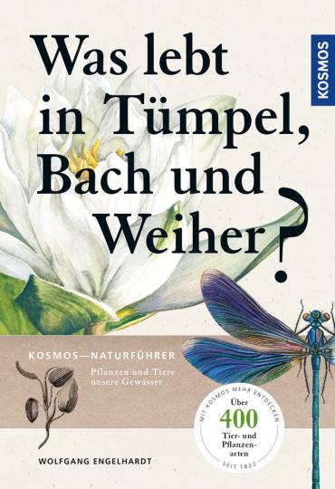 Was lebt in Tümpel, Bach und Weiher? Pflanzen und Tiere unserer Gewässer.