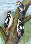 Naturgeschichte der Vögel Mitteleuropas. Bild 1