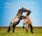 Przewalski Pferde. Bild 1