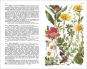 Alpenflora. Der erste umfassende Naturführer der alpinen Pflanzenwelt. Bild 2