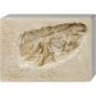 Ausgrabungsset Tyrannosaurus Rex. Bild 2