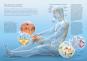 Das Handbuch gegen den Schmerz. Rücken, Kopf, Gelenke, seltene Erkrankungen. Was wirklich hilft. Bild 2
