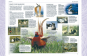 Die europäische Vogelwelt Buch & CD Bild 2