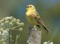 Lebensraum Garten: Die Vogeluhr - Postkartenbuch Bild 2
