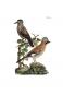 Naturgeschichte der Vögel Mitteleuropas. Bild 2
