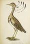 The Magic of Birds. Die Magie der Vögel. Bild 2
