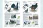 Die europäische Vogelwelt Buch & CD Bild 3