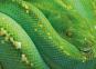 Grün. Das Buch zur Farbe. Bild 3
