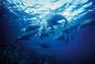 Im Reich der Ozeane. 8 DVDs Bild 3