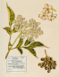 Mein Herbarium. Kräuterschätze und die Lust des Sammelns. Bild 3