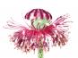 Minh Häusler. The Fusion of Flora and Art. Die Fusion von Flora und Kunst. Bild 3