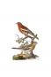 Naturgeschichte der Vögel Mitteleuropas. Bild 3