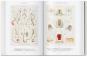 Ernst Haeckel. Kunst und Wissenschaft. Bild 6