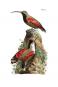 Naturgeschichte der Vögel Mitteleuropas. Bild 6