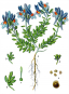 Jacob Sturm. Die Flora von Deutschland. Bild 7