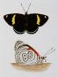 Schmetterlinge und ihre Flügel. Bild 7